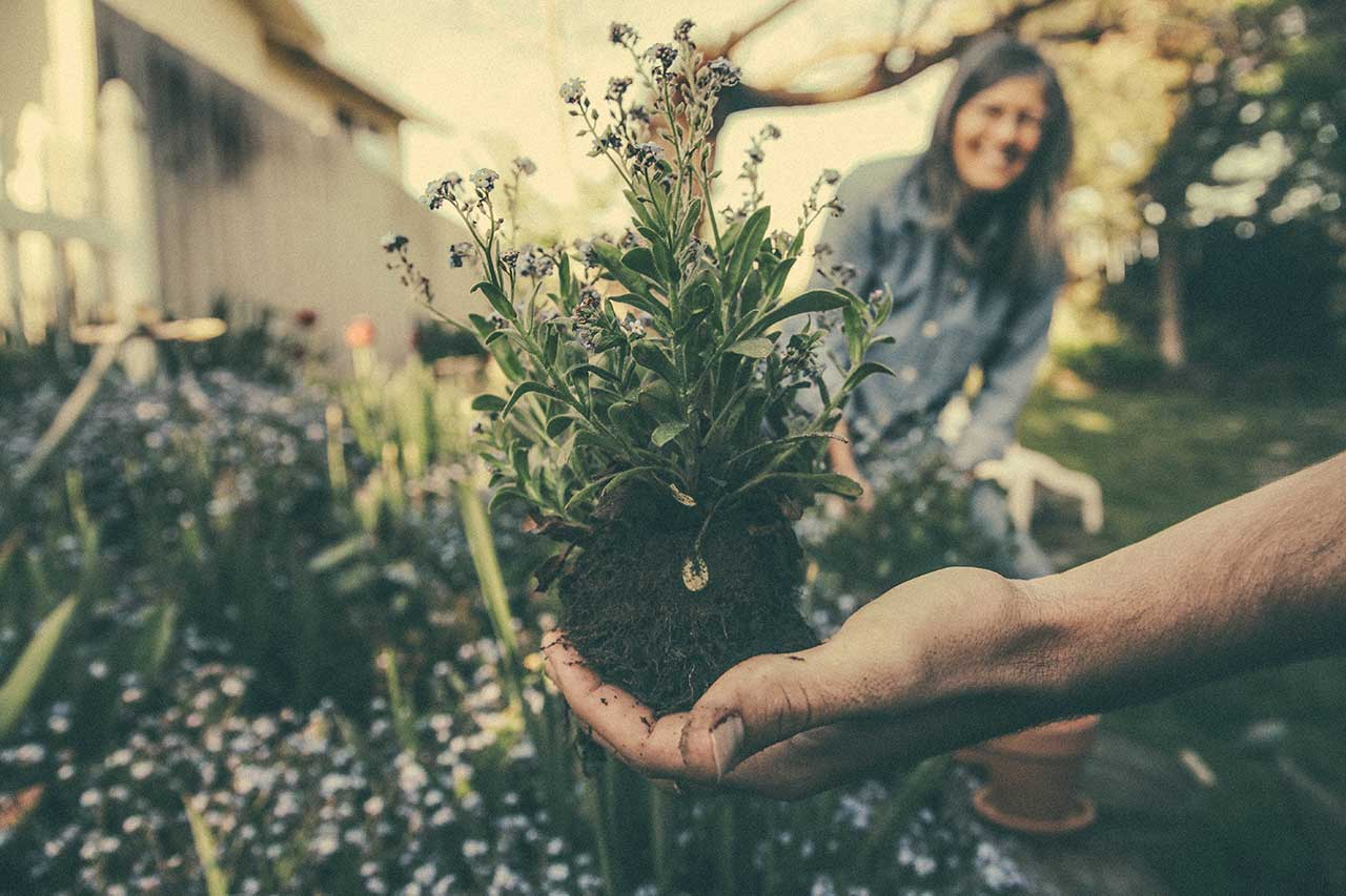Image of Planting